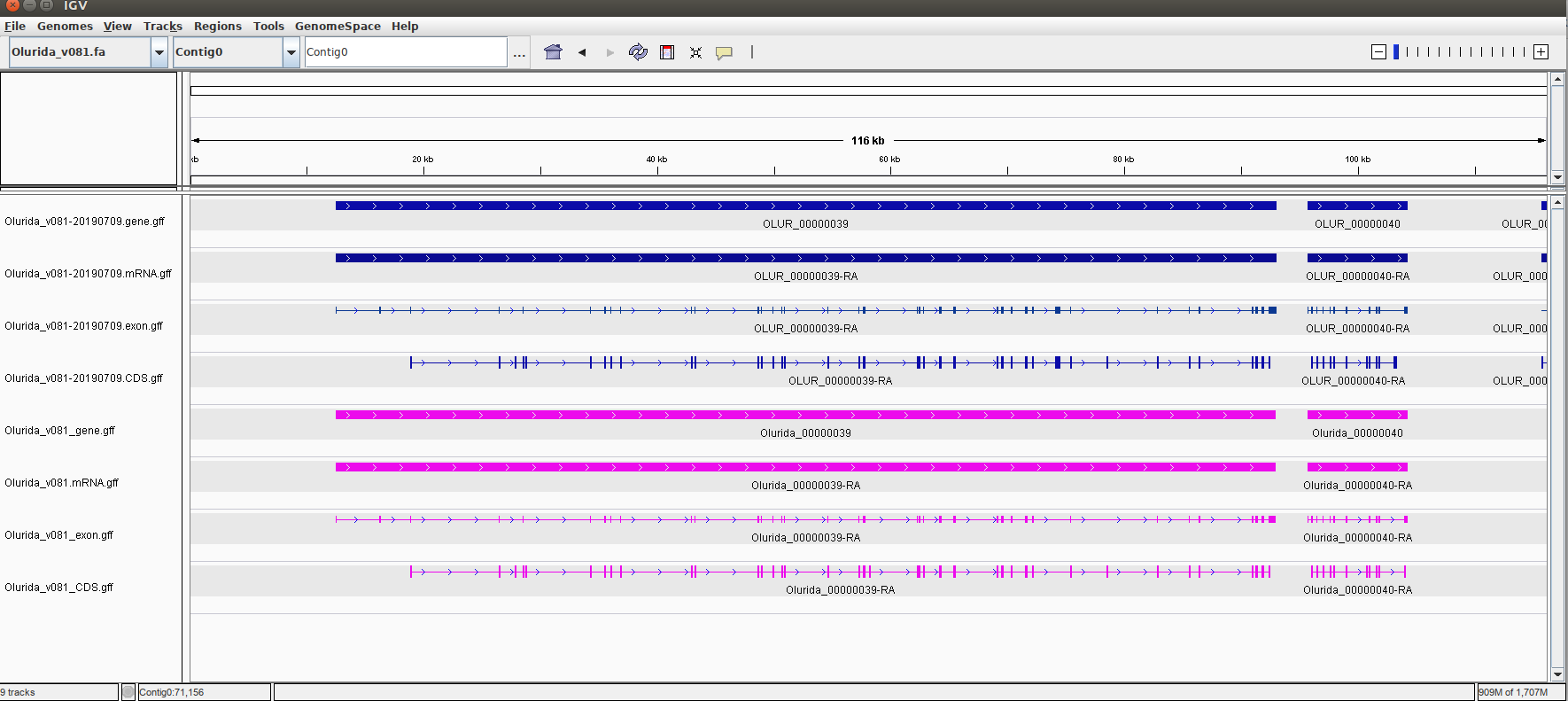 IGV screencap showing same annotations between original v081 and current v081 annotations