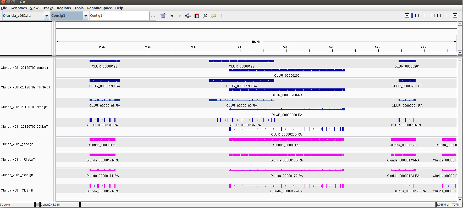IGV screencap showing additional annotations in current v081