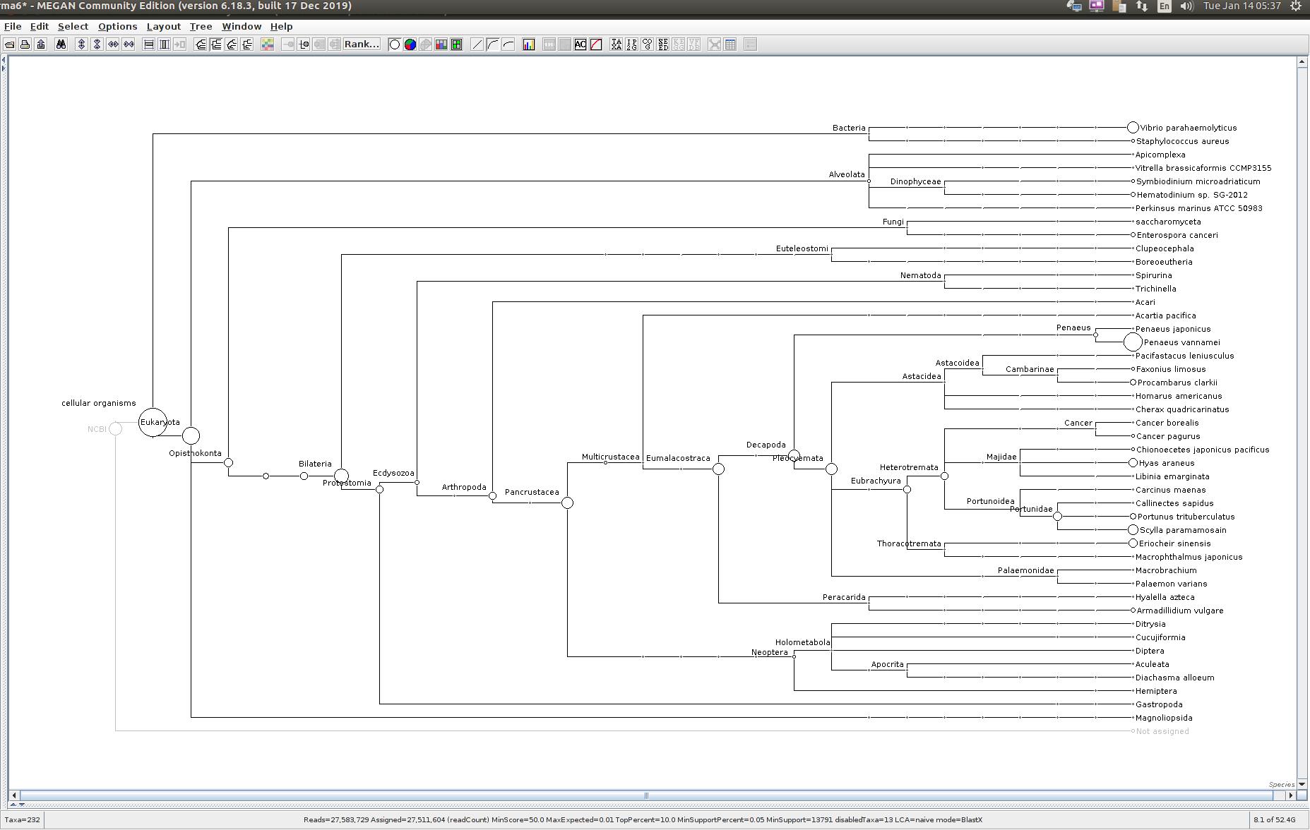304428 MEGAN6 taxonomic tree