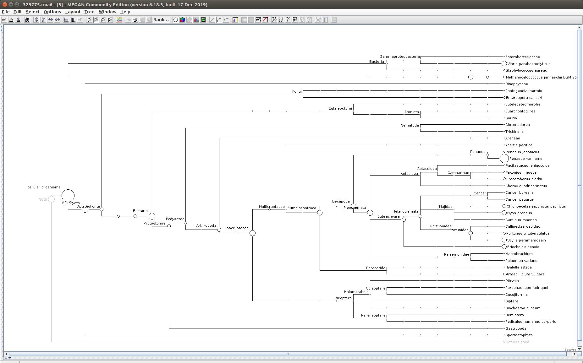 329775 MEGAN6 taxonomic tree