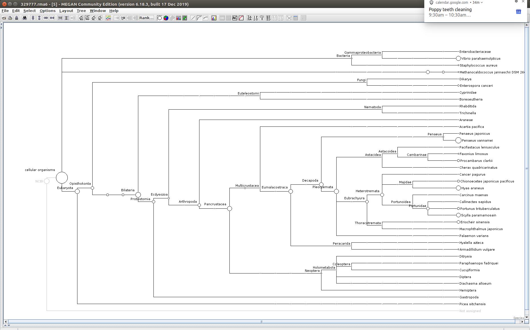 329777 MEGAN6 taxonomic tree