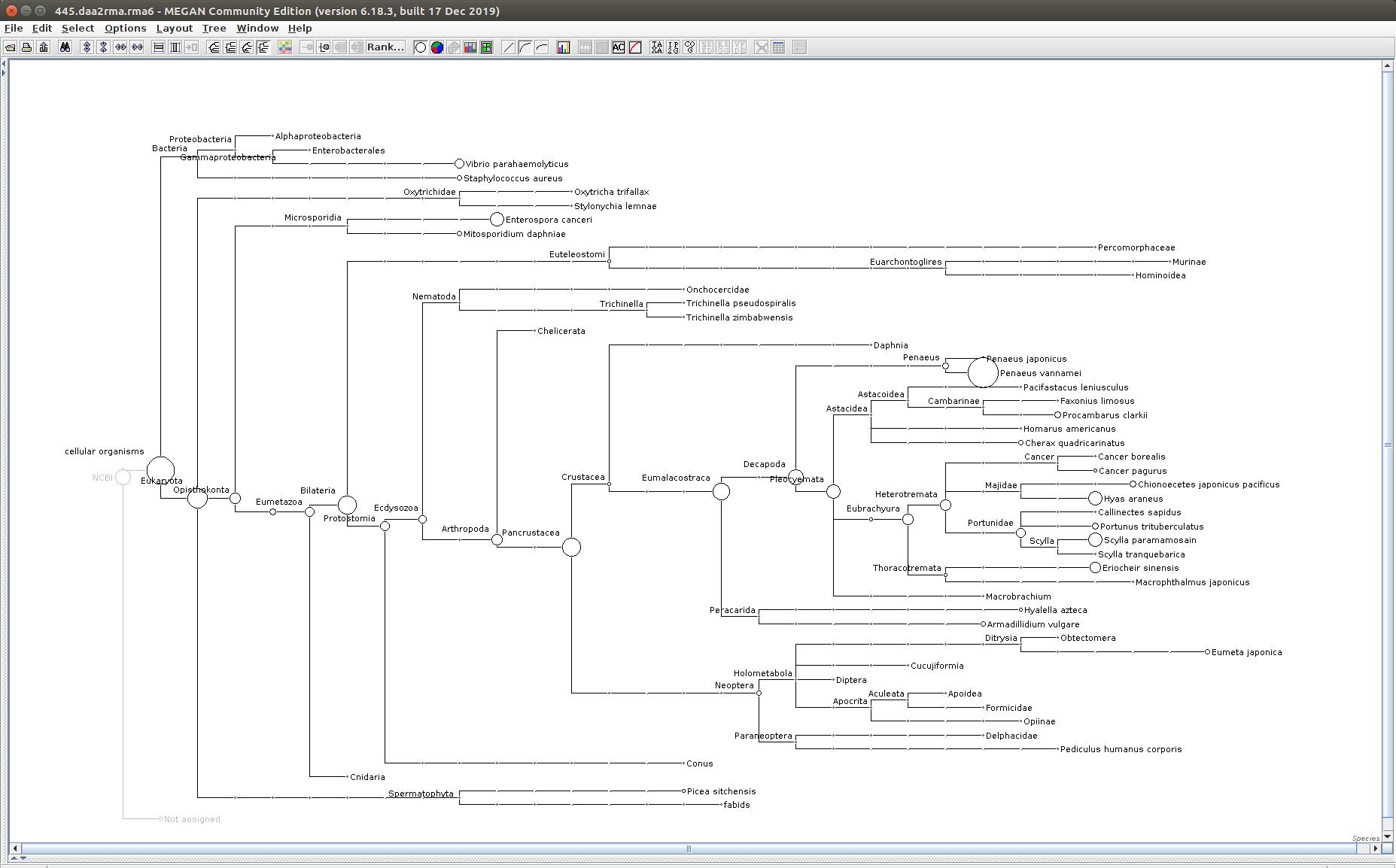 445 MEGAN6 taxonomic tree