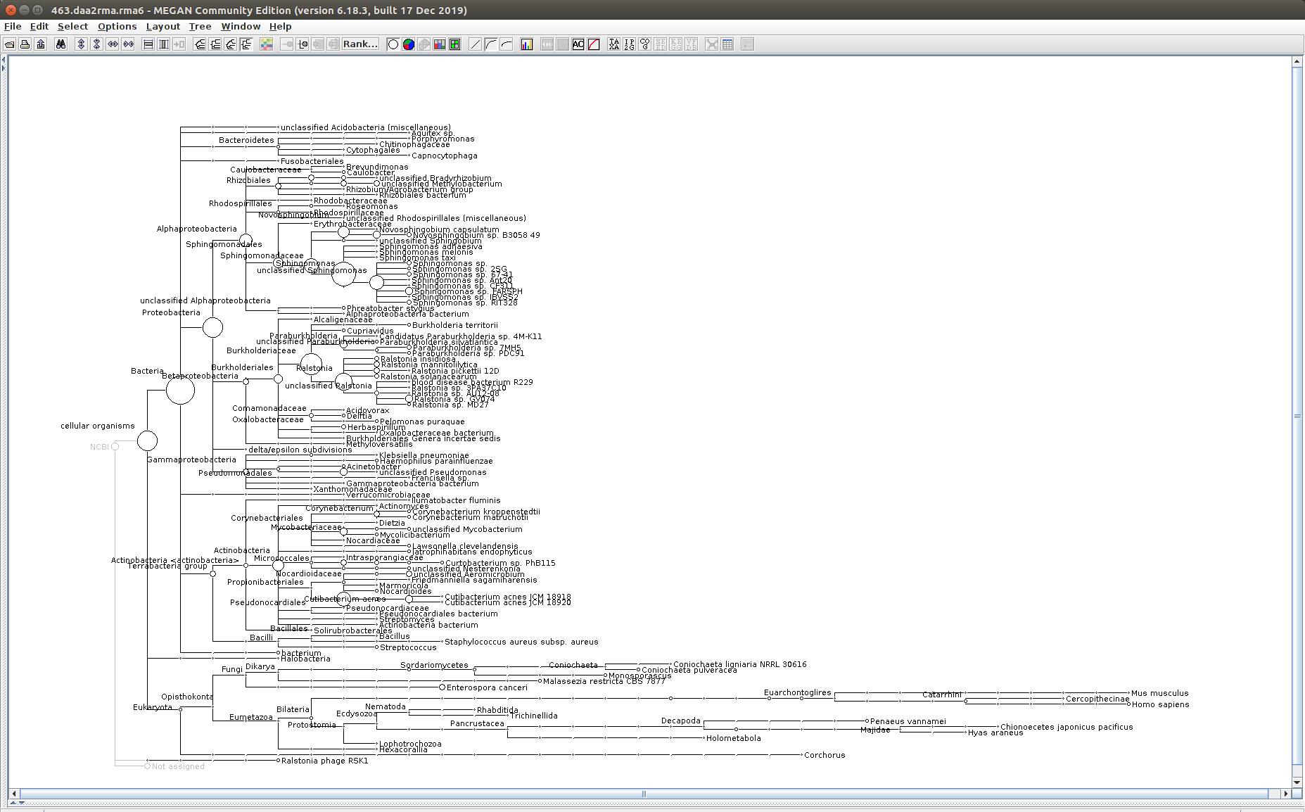 463 MEGAN6 taxonomic tree