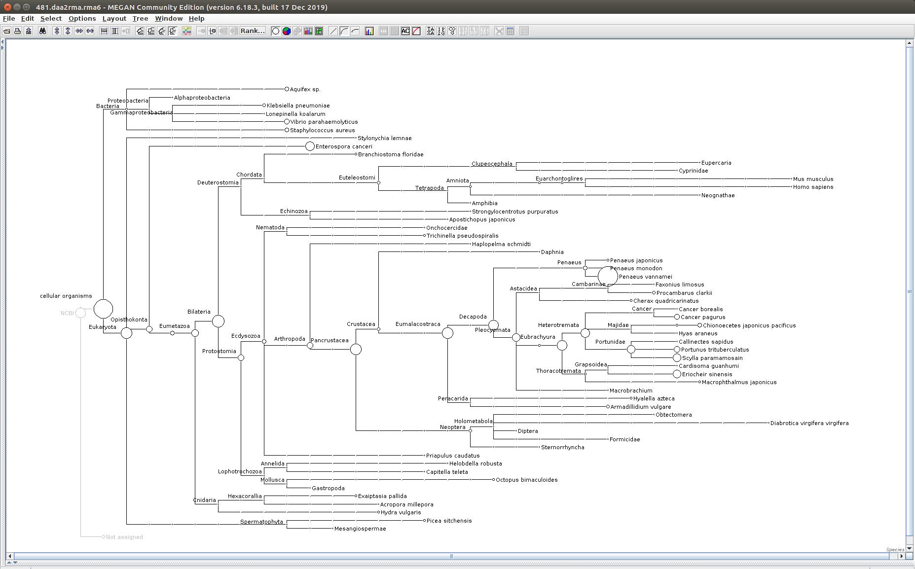 481 MEGAN6 taxonomic tree