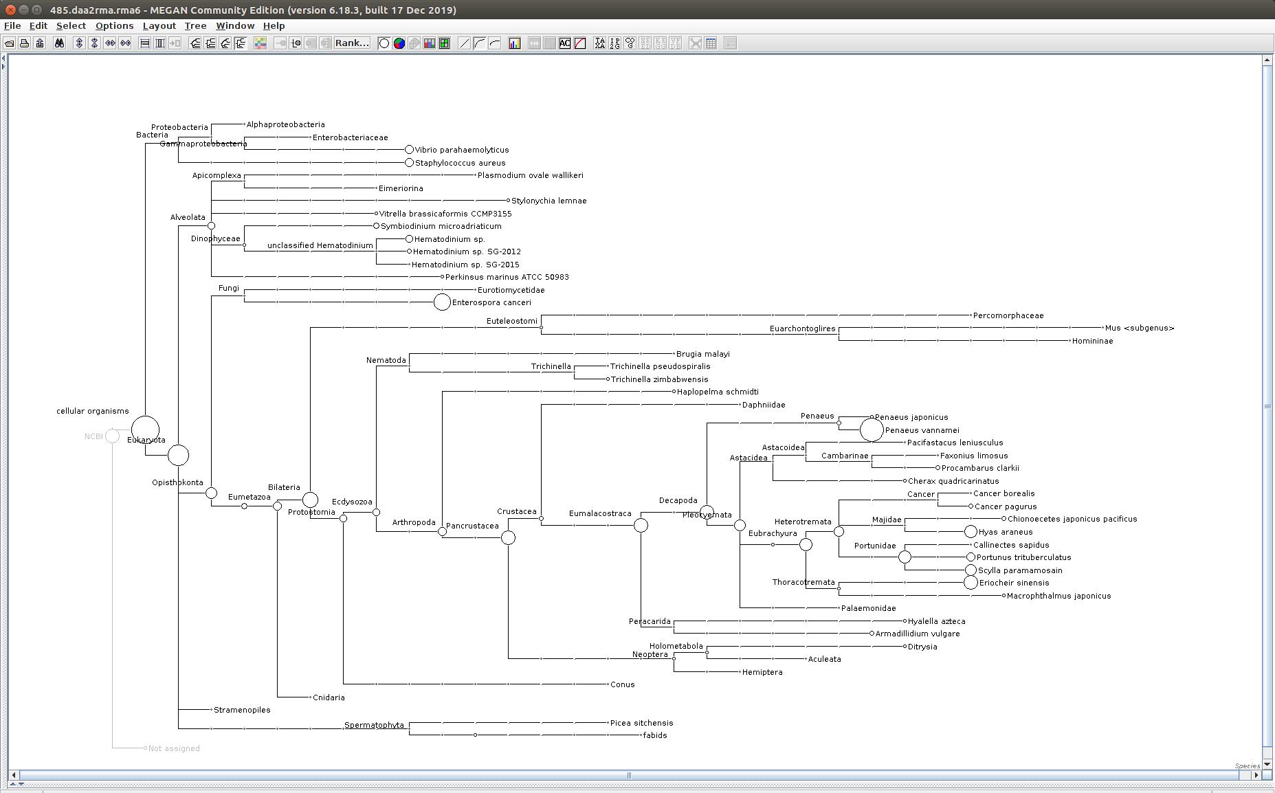 485 MEGAN6 taxonomic tree