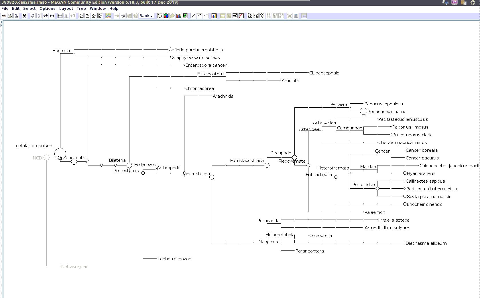 (MEGAN taxonomic tree for 380820