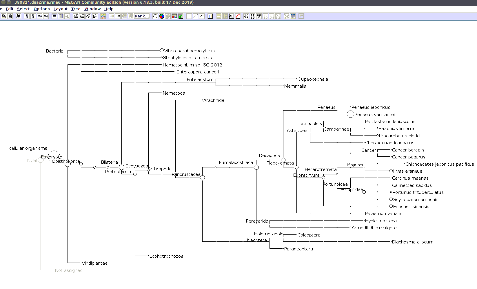 (MEGAN taxonomic tree for 380821