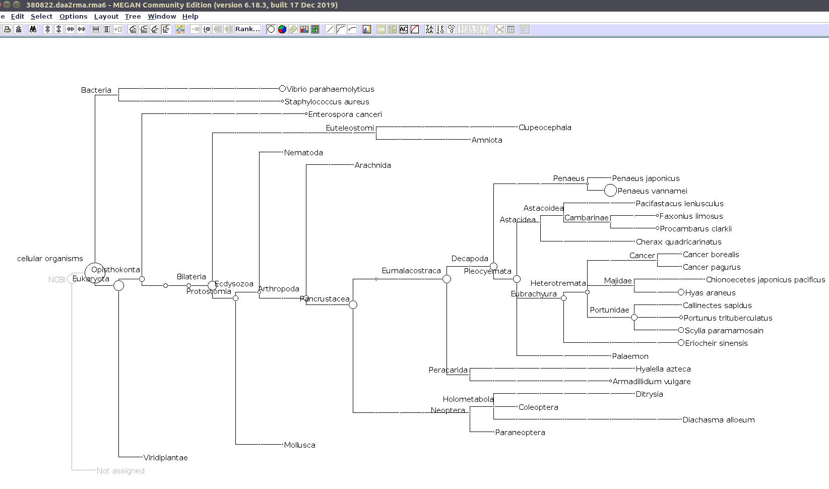 (MEGAN taxonomic tree for 380822