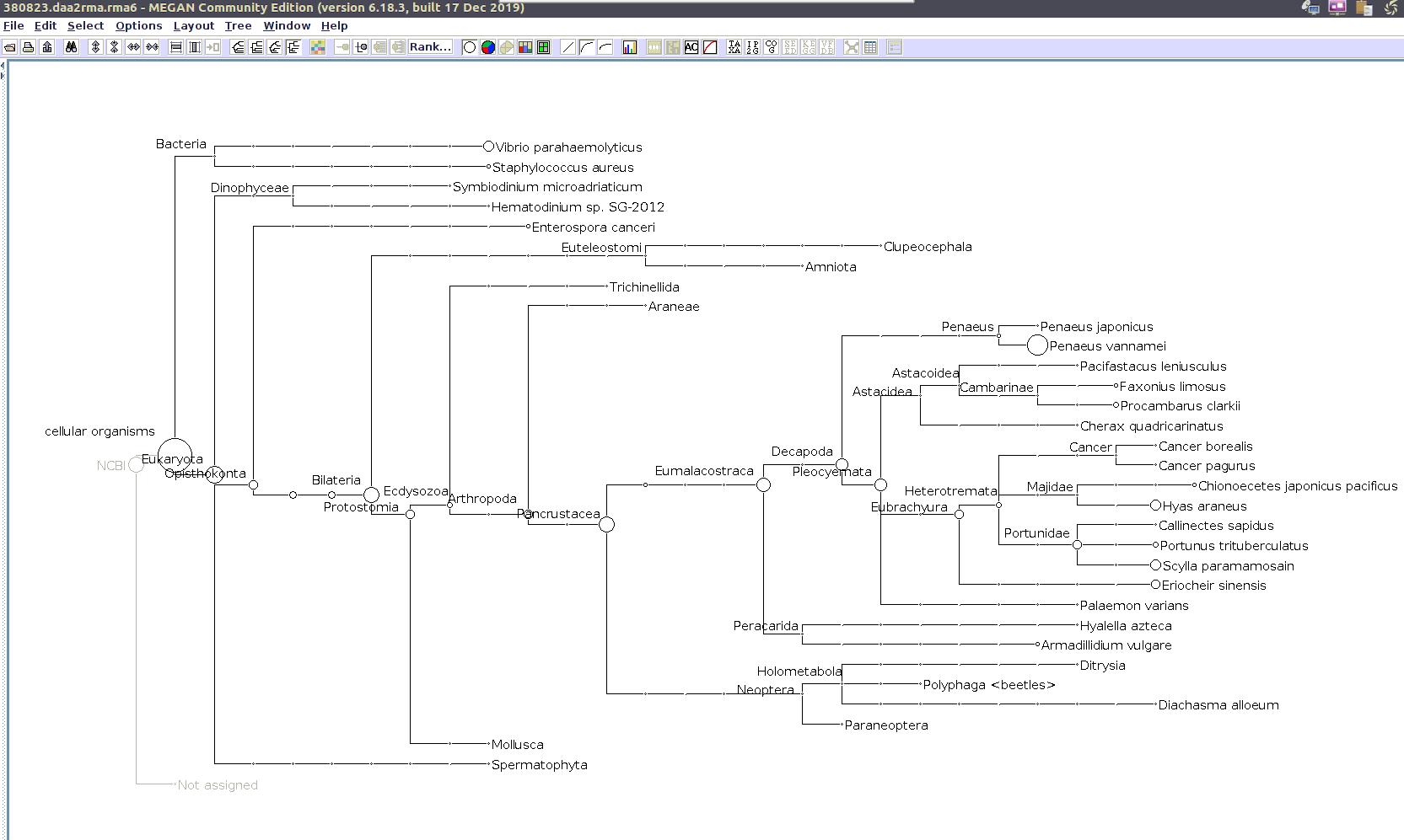 (MEGAN taxonomic tree for 380823