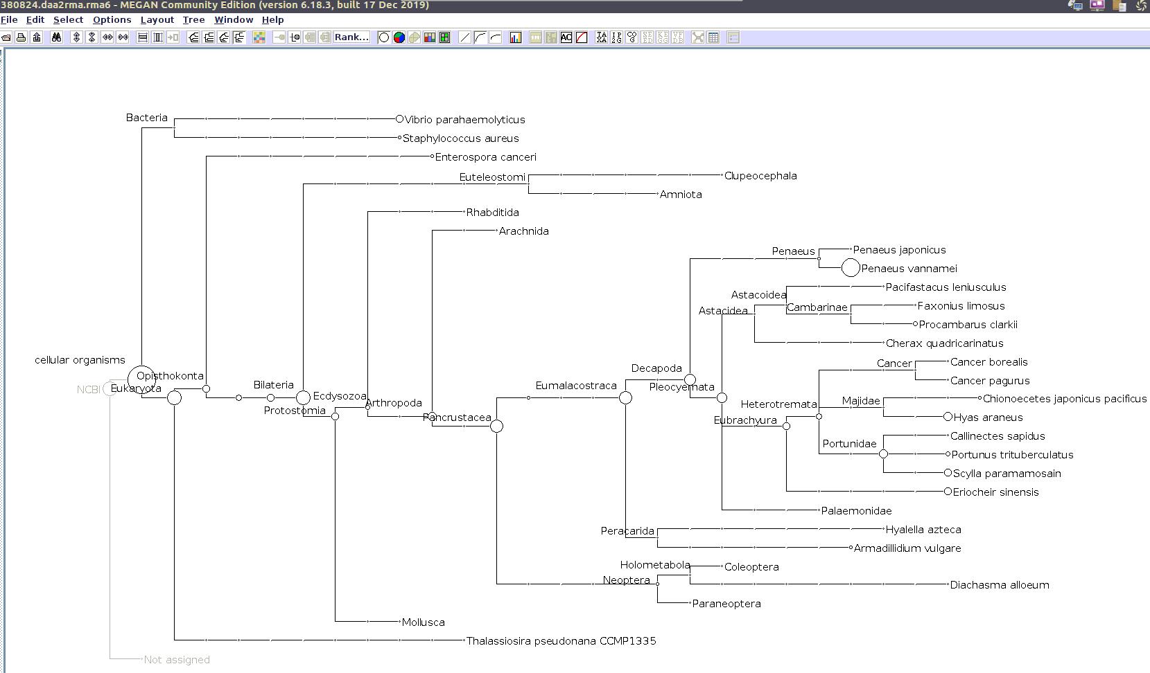 (MEGAN taxonomic tree for 380824