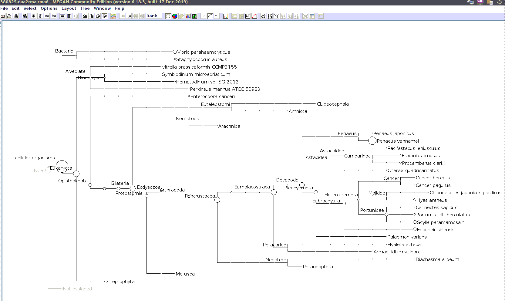 (MEGAN taxonomic tree for 380825