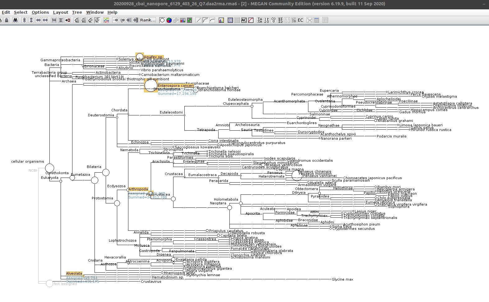 6129-403-26-Q7 MEGAN6 taxonomic assignments