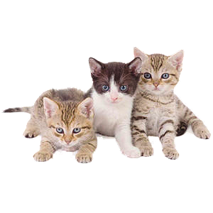 save_kittens icon