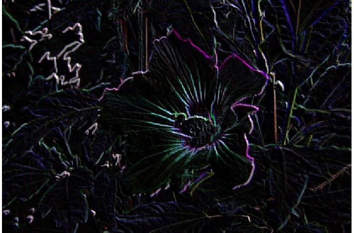 violetbihua