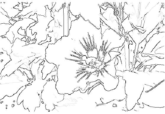 violetedge