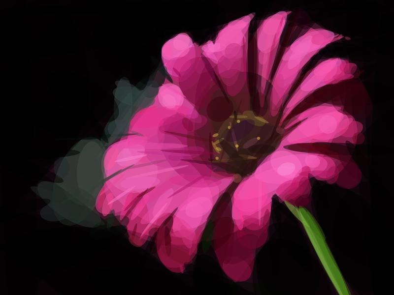 Geometrized Flower - 330 Rotated Ellipses