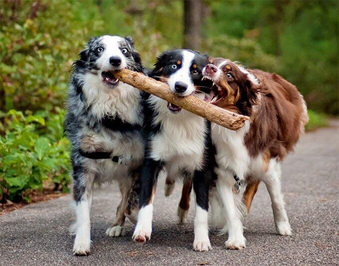Async dogs