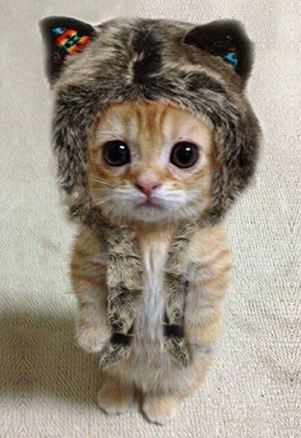 An orange tabby kitten stands upright on its hind legs with a fur hat on its head. Photo by sillymonkeyart on eBay