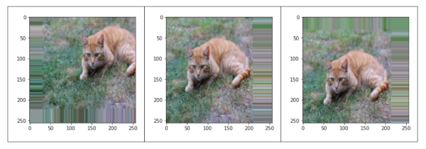 Height and width shift cat