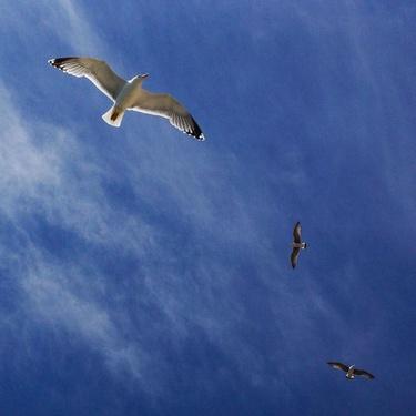 Smart cropped birds
