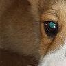 Original doggy