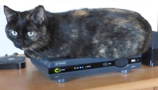 Kiwi-techie