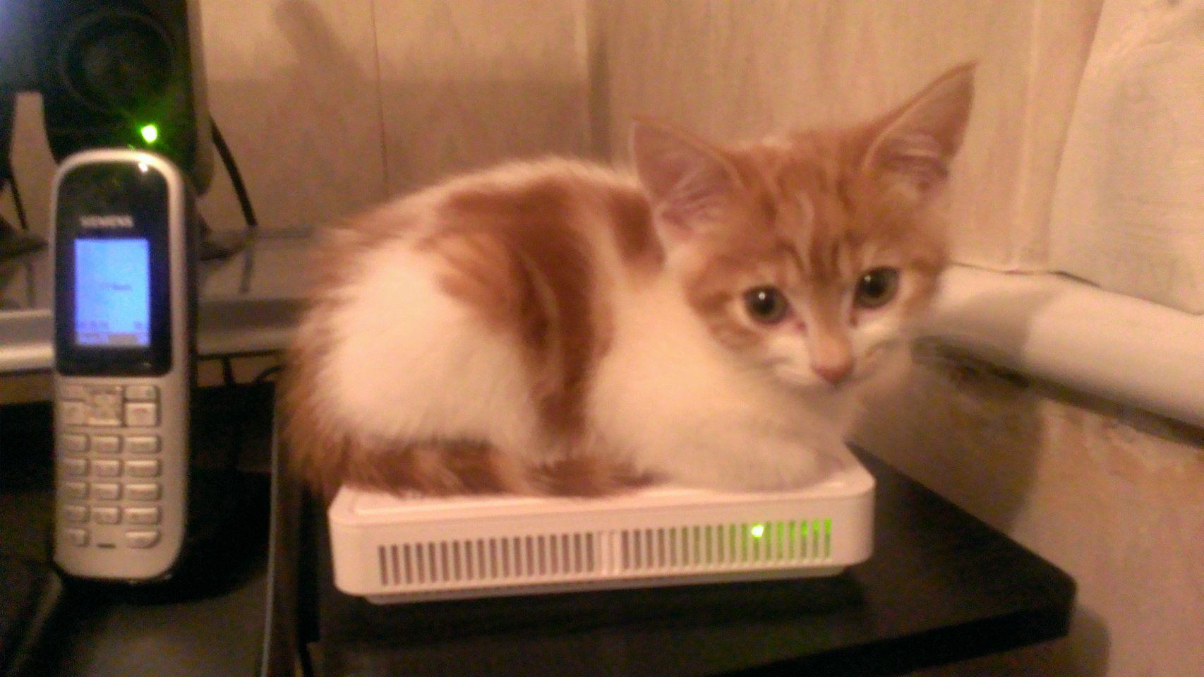 Micro kittey!