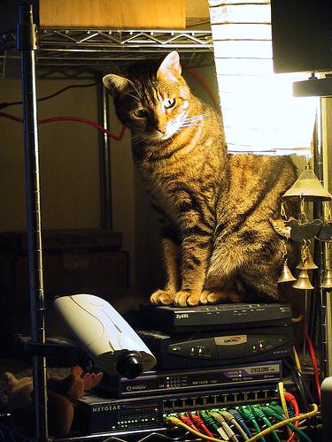 cat_in_a_rack