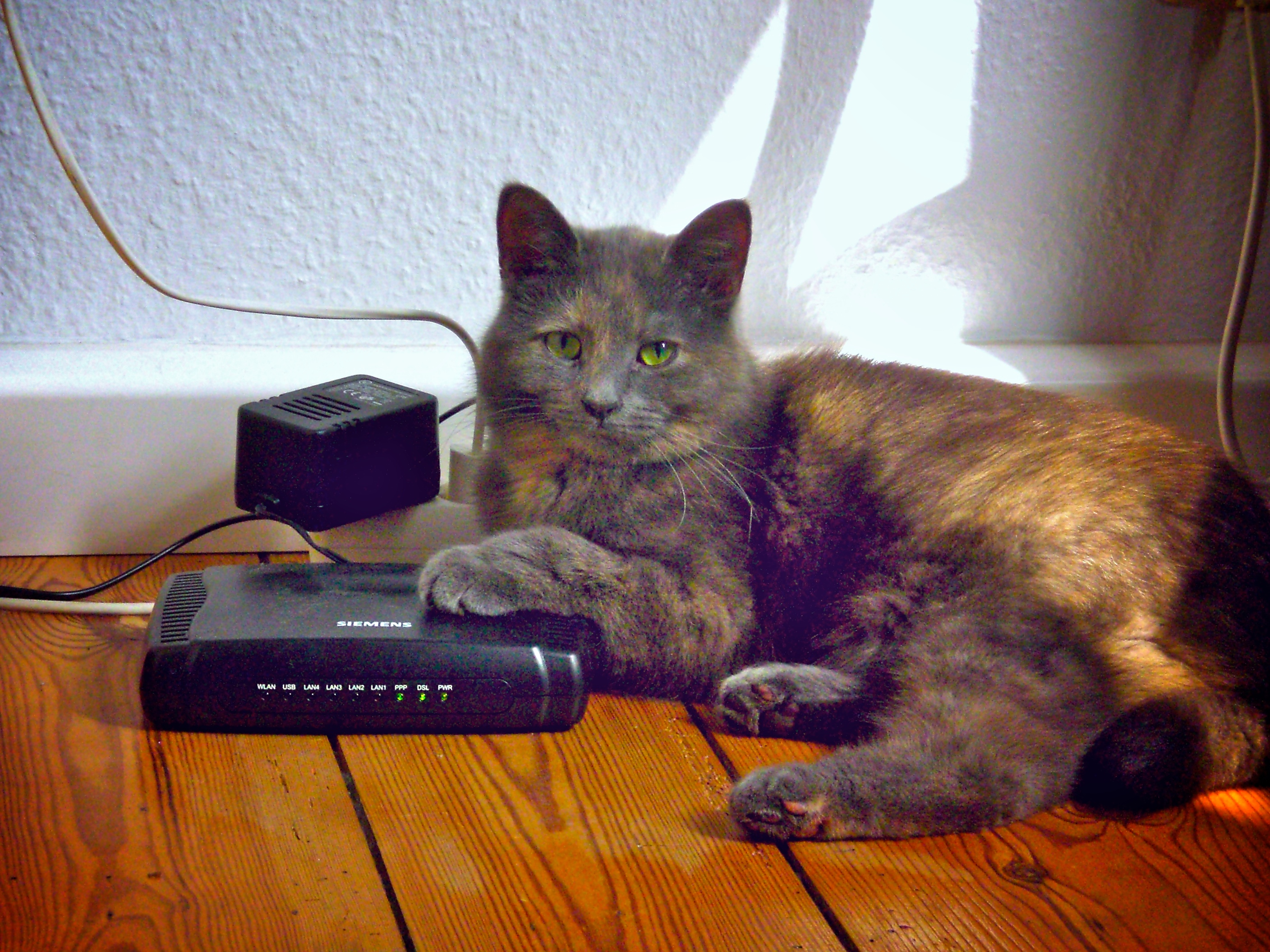 catrouter_barely
