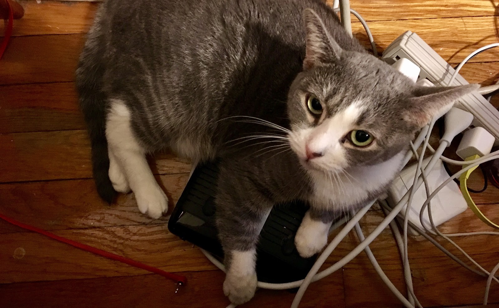Modem-kitty