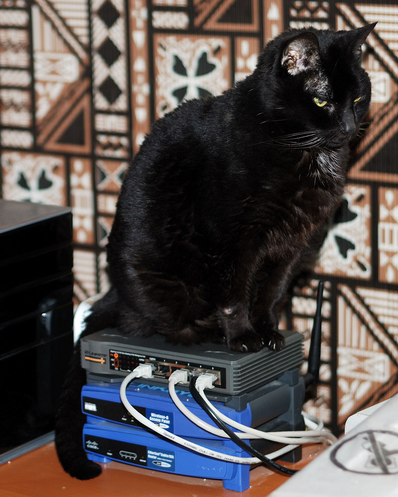 Stacked kitteh!