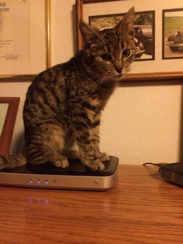 thin_kitty_warm_kitty