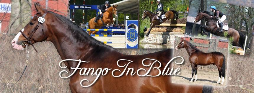 Image of Fango