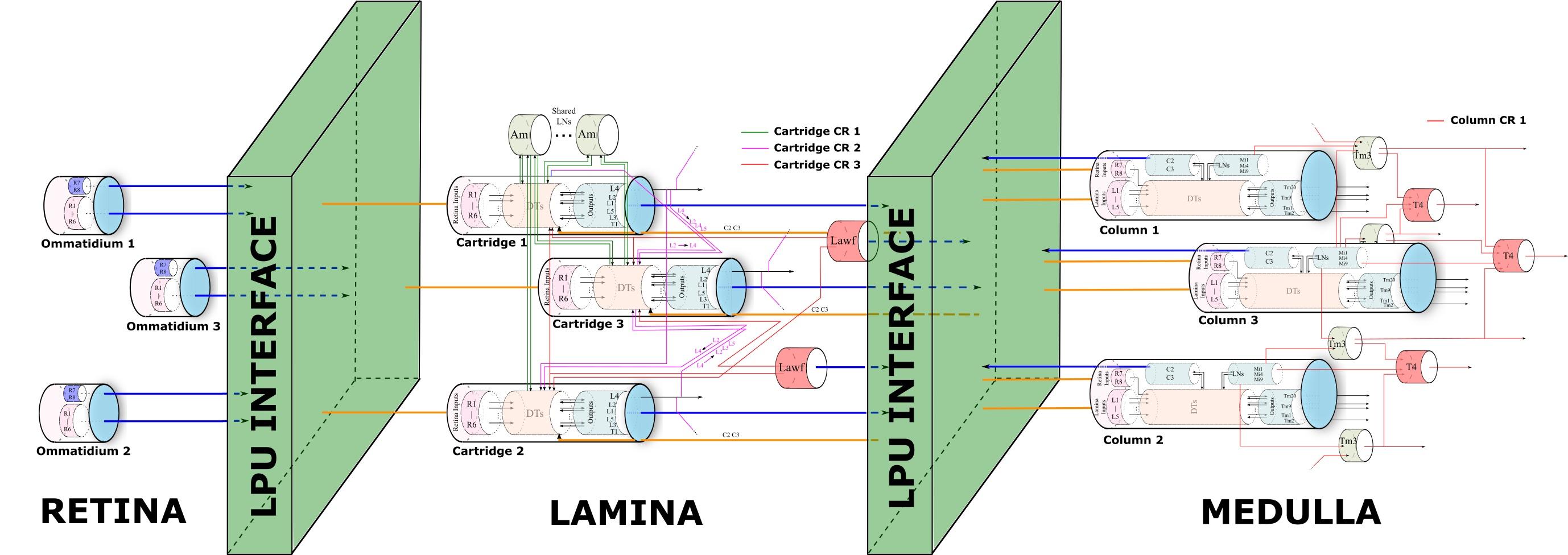 https://raw.githubusercontent.com/bionet/bionet.github.io/img/img/vision.jpg