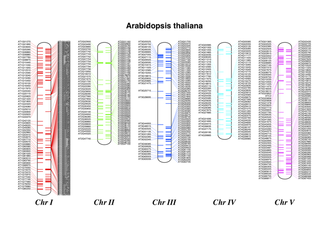 tRNA genes in Arabidopsis thaliana