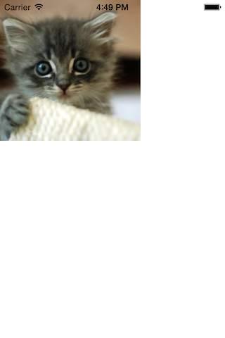 Place kitten example