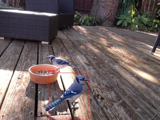 Bird detected using deep learning camera