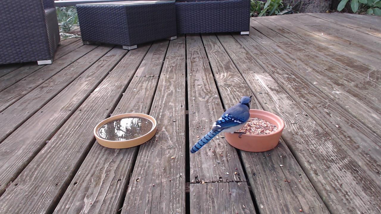HD Bird