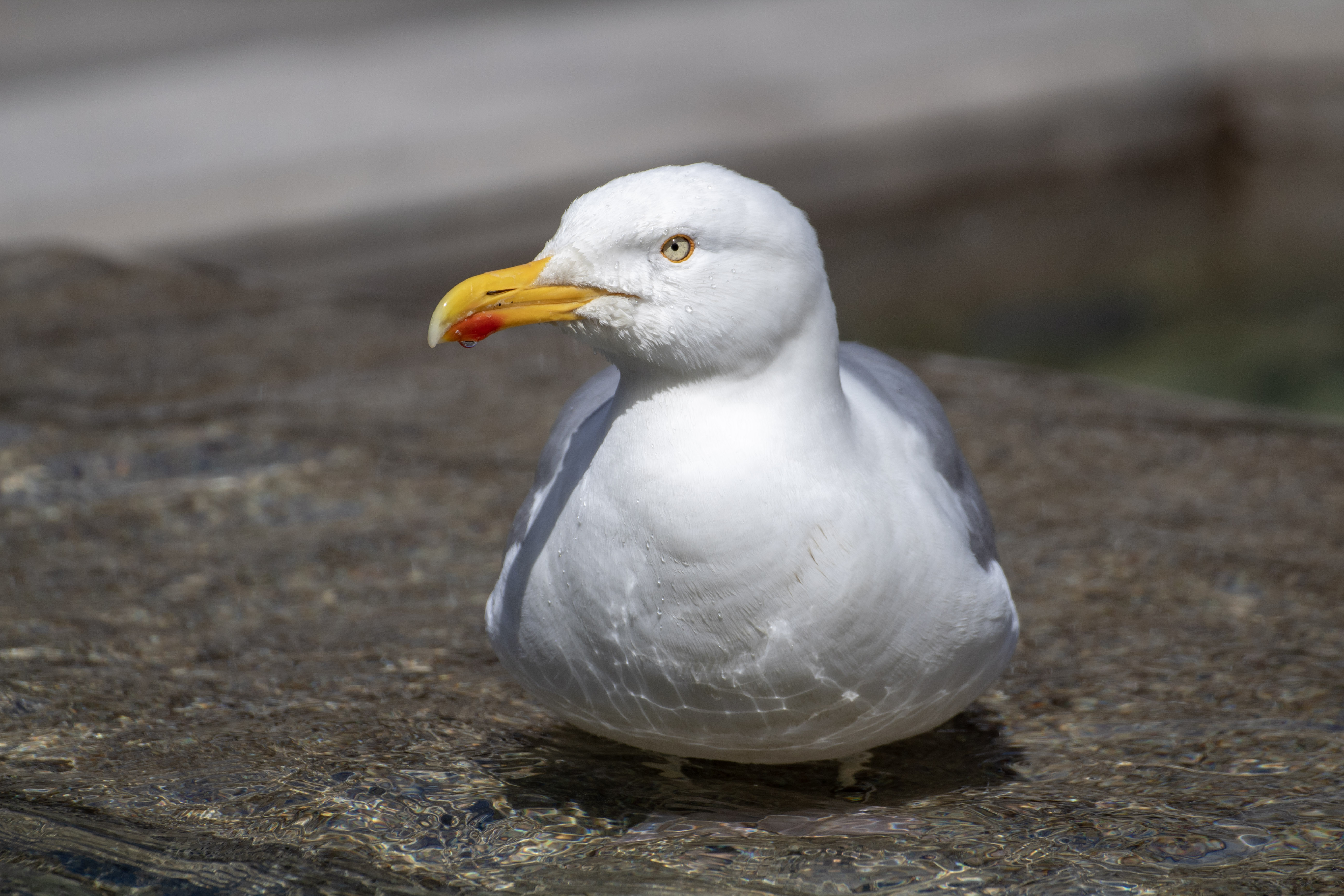 bird-photo1