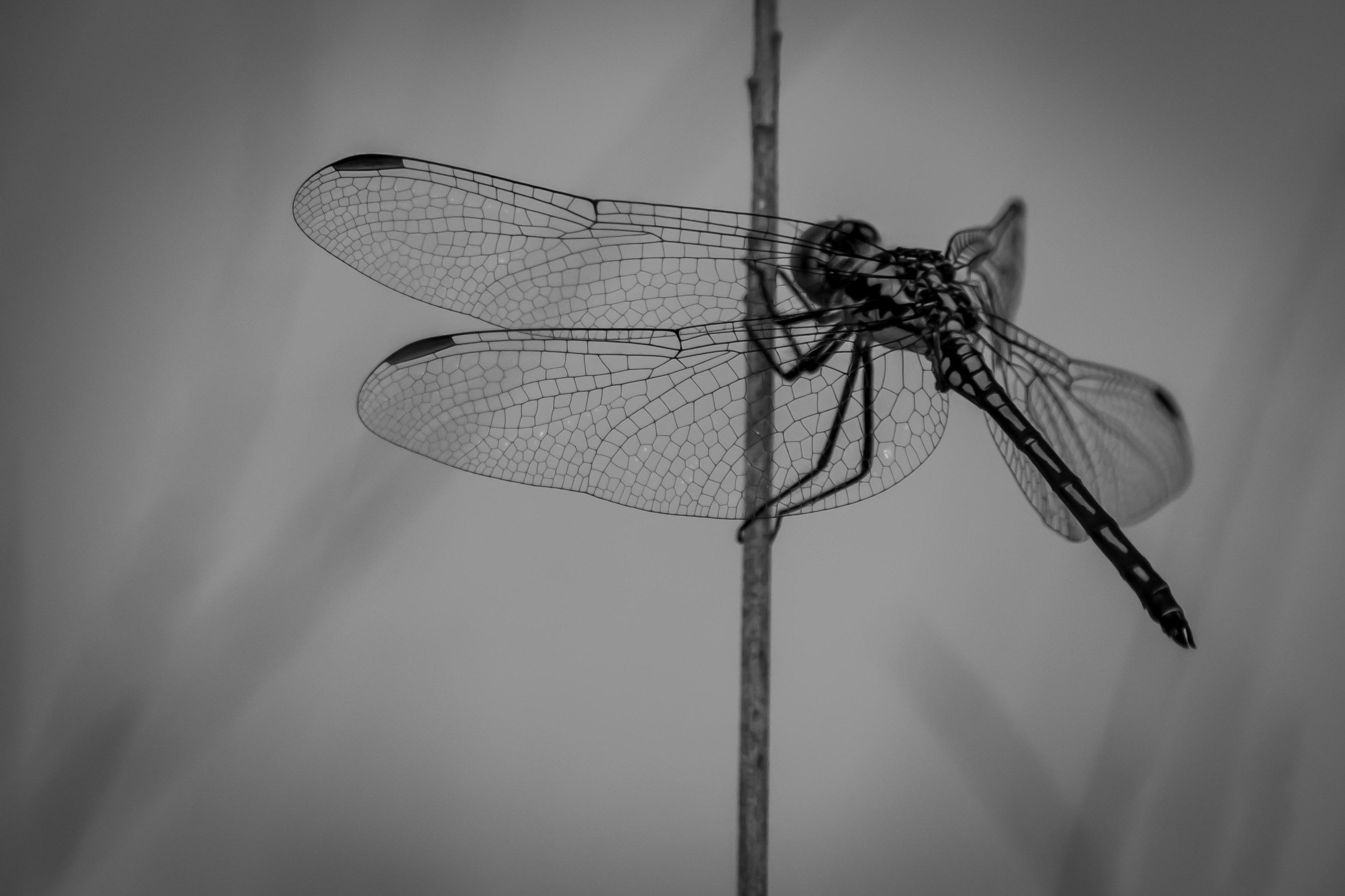 dragon-fly-photo