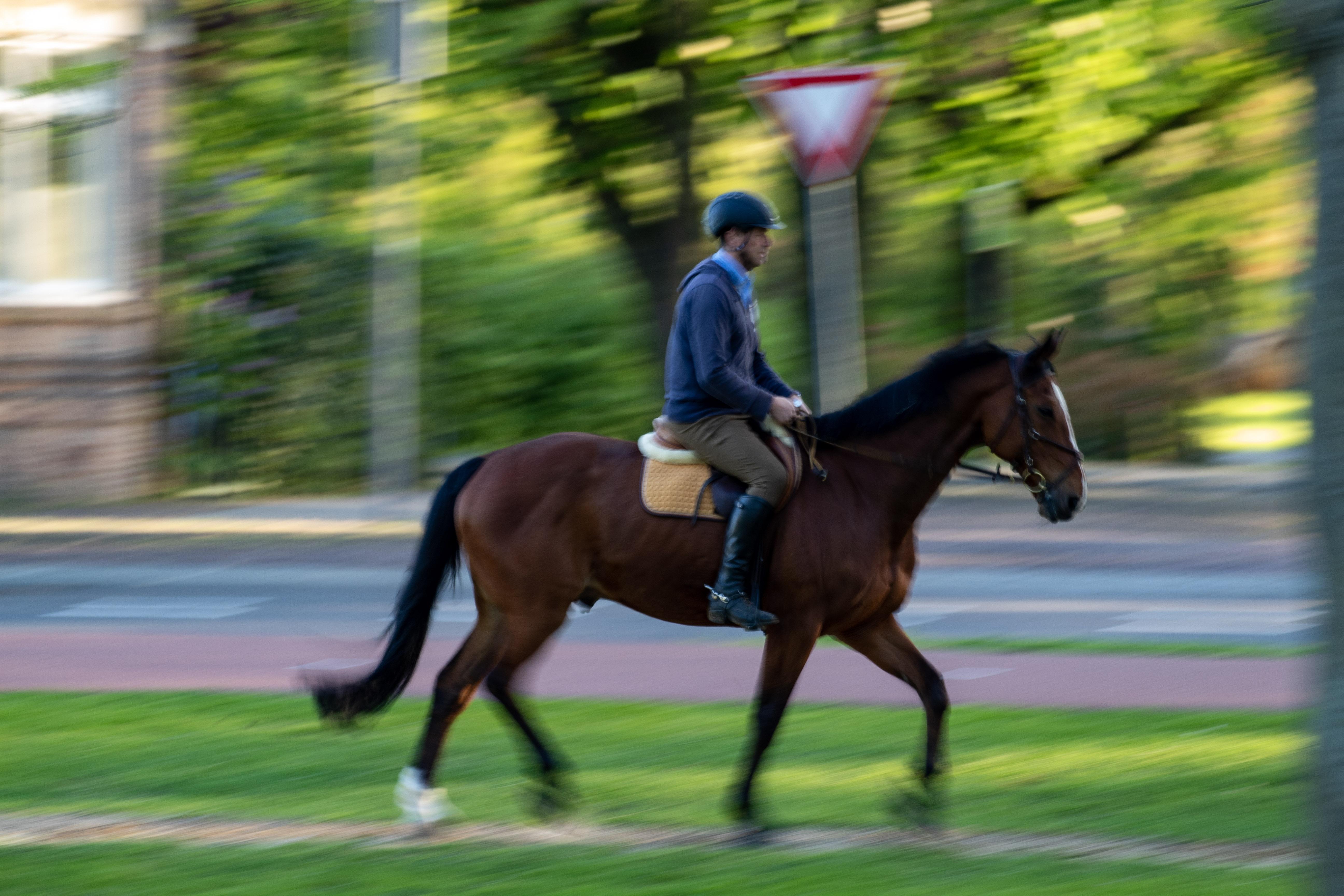 horse-photo