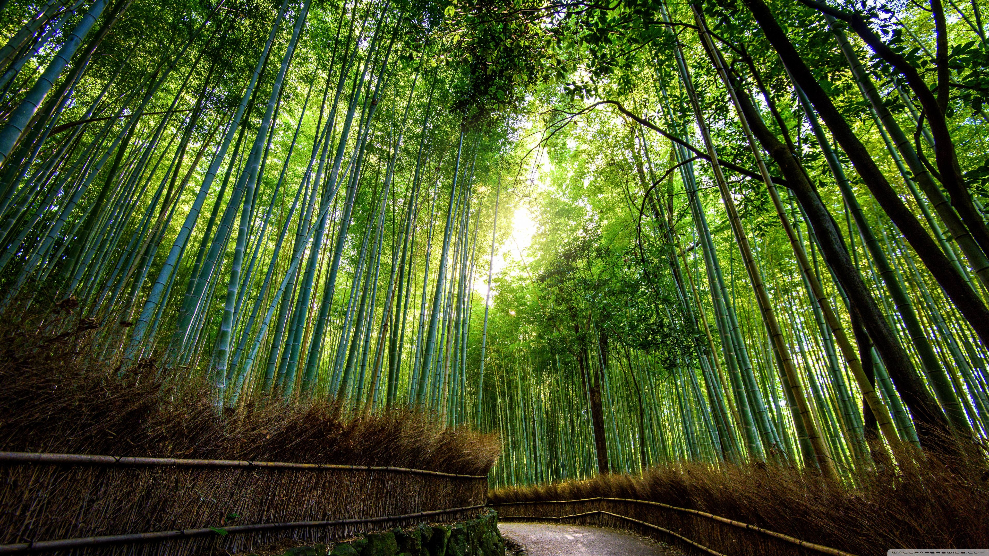 Relaxing HD Wallpapers - Japanese Bamboo Forest
