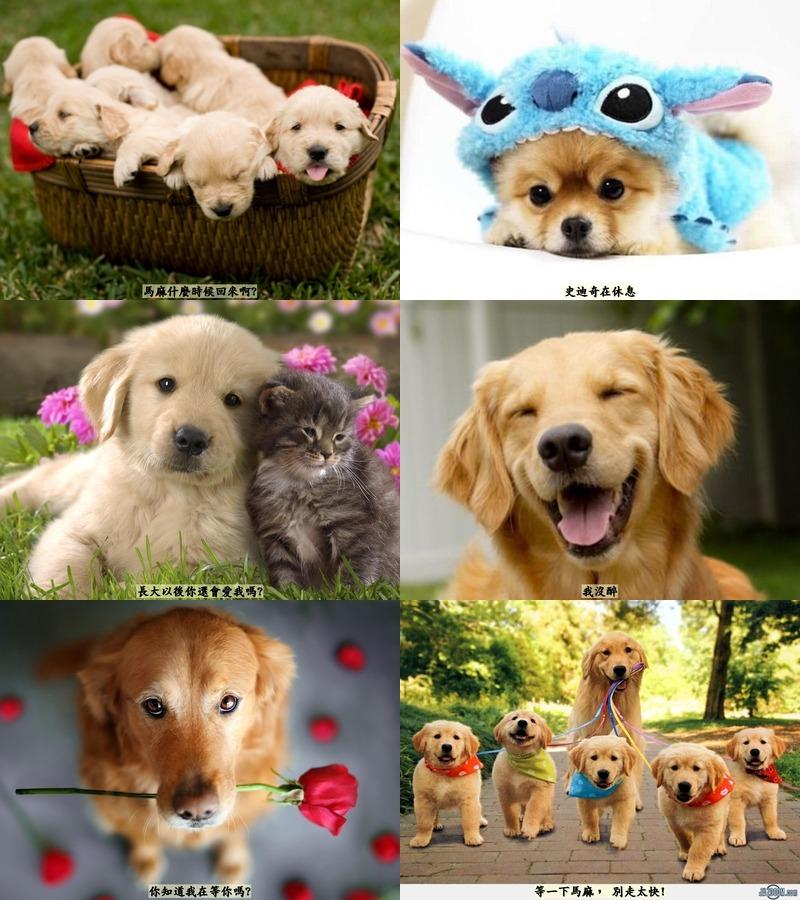 可愛狗狗照片集錦