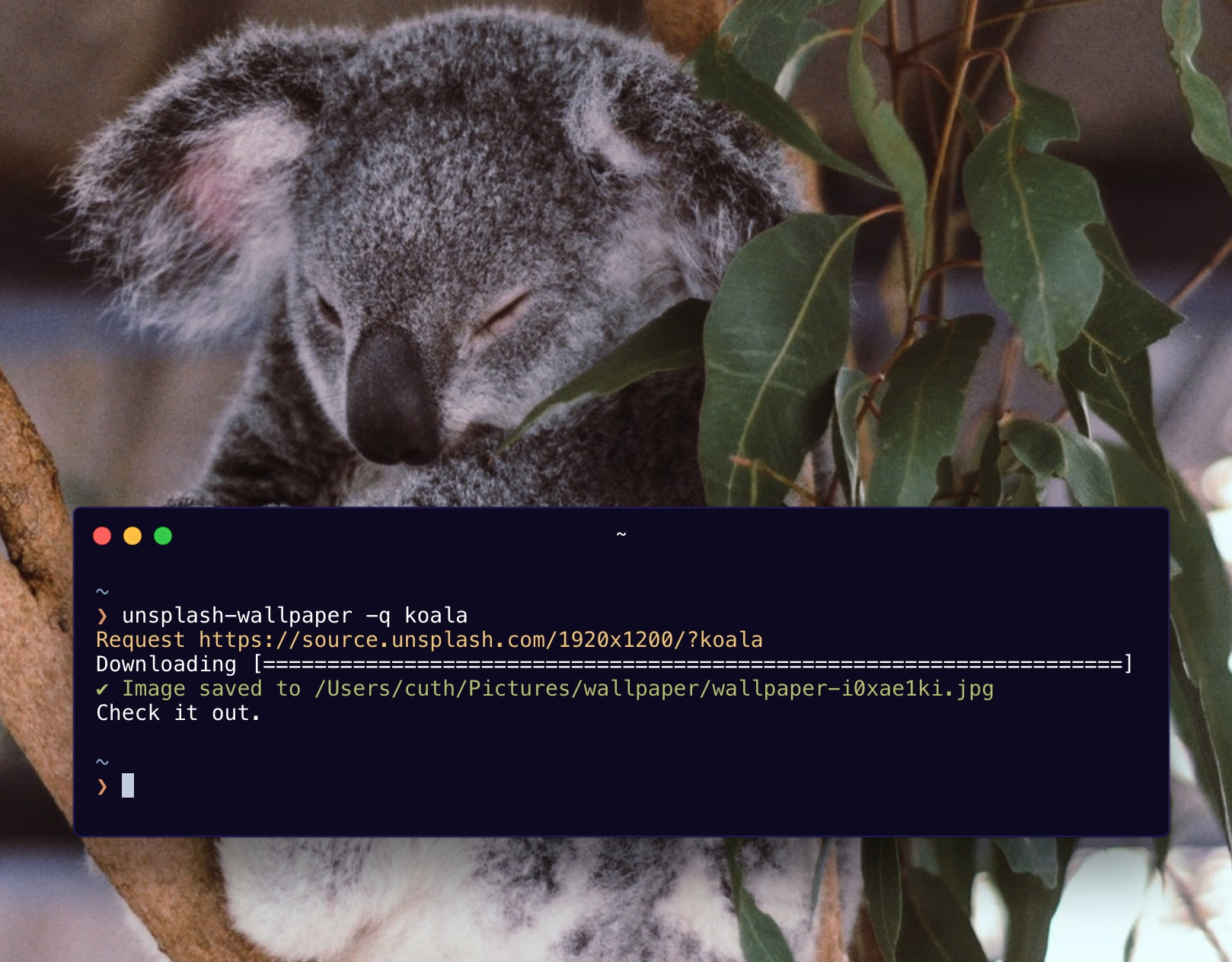 Koala search screenshot