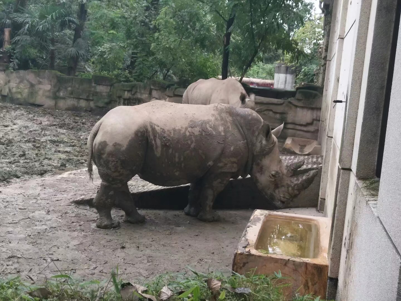 2017.10 成都·动物园
