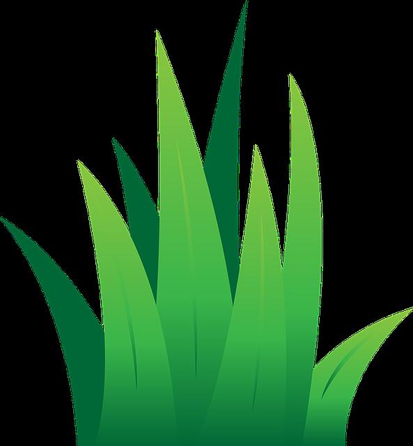 mygarden