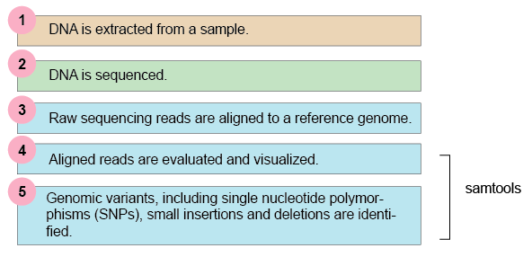 Typical Next-Generation Sequencing Workflow.