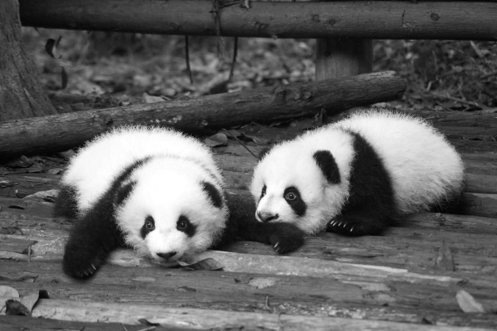 Be the pandas we need