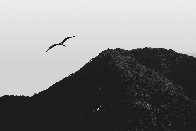Julia_Craice_ElementaryOS_Backgrounds