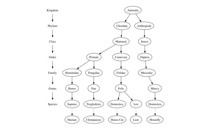 6.2.树的例子.figure1